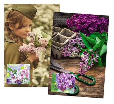 Набор «Сирень» (открытки+марки)